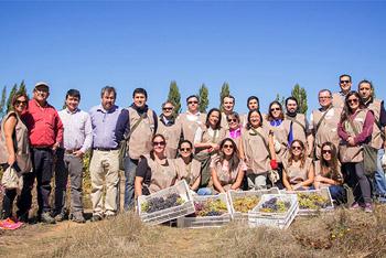 Colaboradores de Blumar participaron en Cosecha Solidaria de uvas en Quillón
